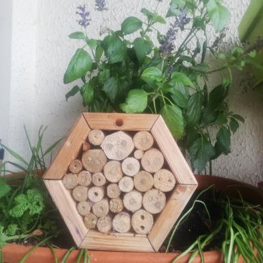 Maison pour abeilles sauvages avec colonie d'abeilles