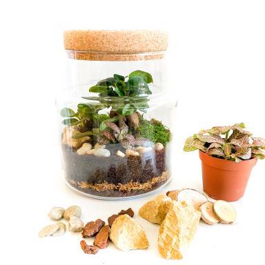 Kit DIY Terrarium Fermé Complet Plantes Vertes