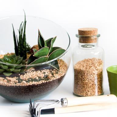 Kit DIY Terrarium Complet: Cactus, Plantes Grasses et Plantes Vertes